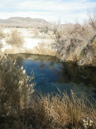 Ash Meadows National Wildlife Refuge : The pool where the pupfish roam