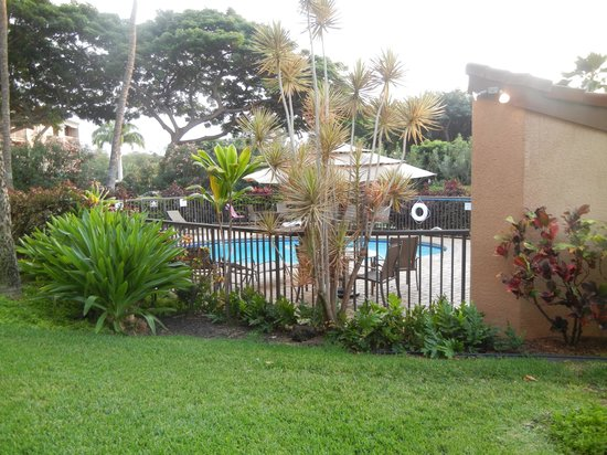 Maui Vista Resort : the pool