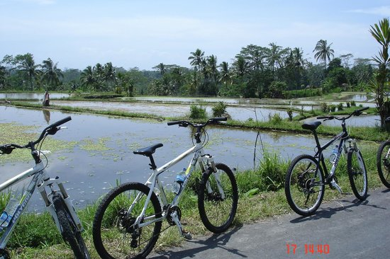 Happy Bike Cycling Tour: Overlooking rice paddies