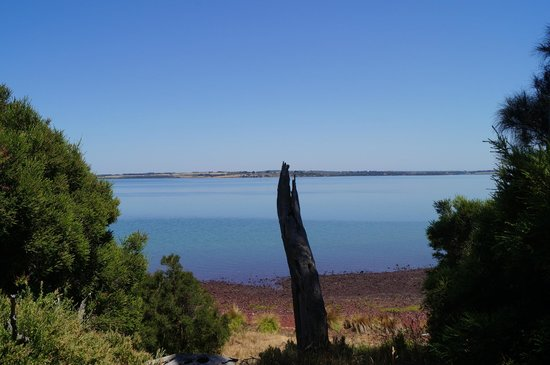 Churchill Island: looking across to rhyll