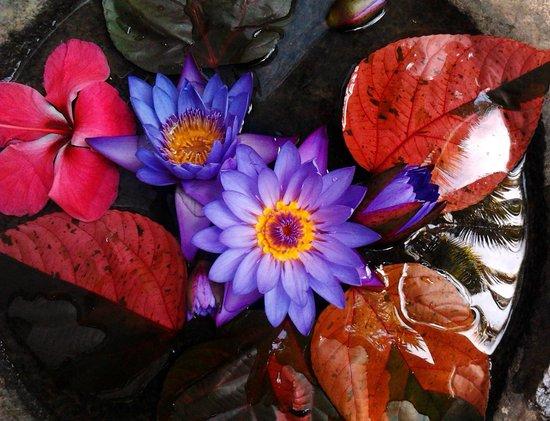 Shiva Garden: altar