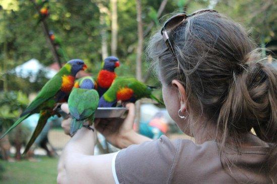 Currumbin Wildlife Sanctuary : Don't be bird phobic
