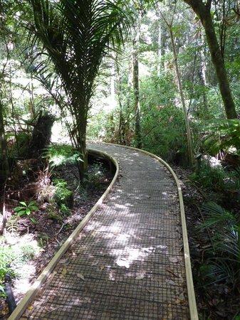 DOC Trounson Kauri Park
