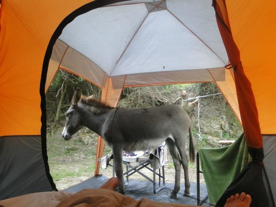 Amapondo Backpackers Lodge: Cute donkey !