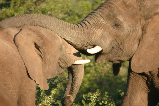 Hopewell Lodge : Elephant inteaction