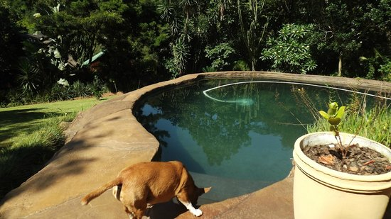 Tree House River Lodge : The pool