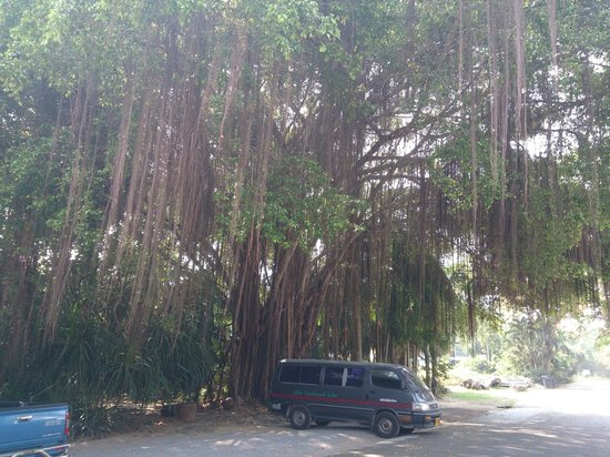 Ban Nam Mao Resort : car parking in front of hotel - nice trees