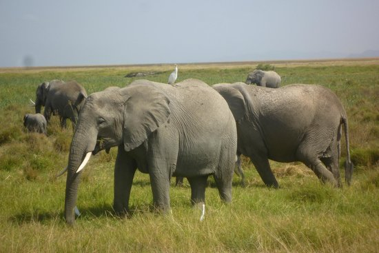 Amboseli National Park: The great jumbo elephants of Amboseli