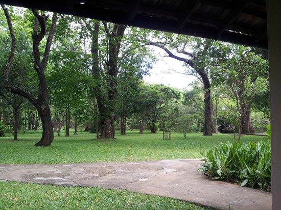 Sigiriya Village Hotel: View from room