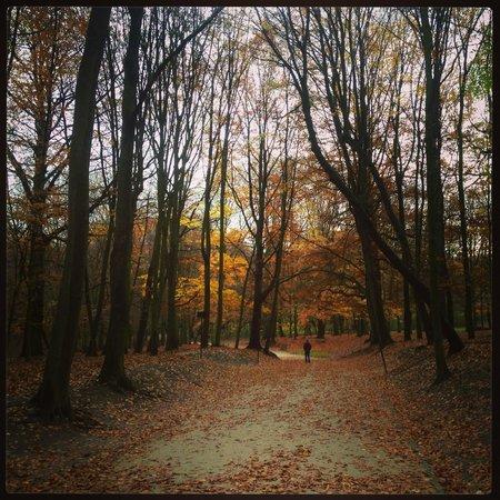 Bois de la Cambre and Foret de Soignes : November Walk