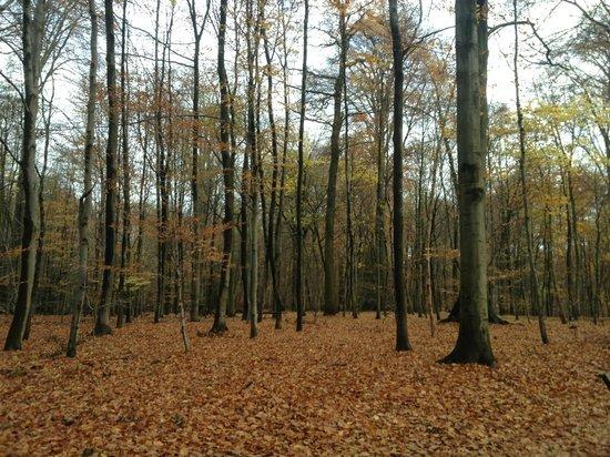 Bois de la Cambre : November Walk