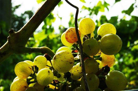 Quance Wines