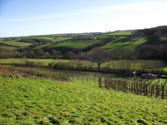 Swimbridge, UK: View from the vineyard
