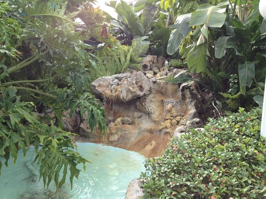 Tropical Beach Resorts: A fountain outside our room attracted parrots in the a.m.