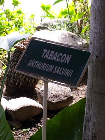 Radisson Hotel San Jose Costa Rica: Exotic plants have identifying signs throughout hotel grounds