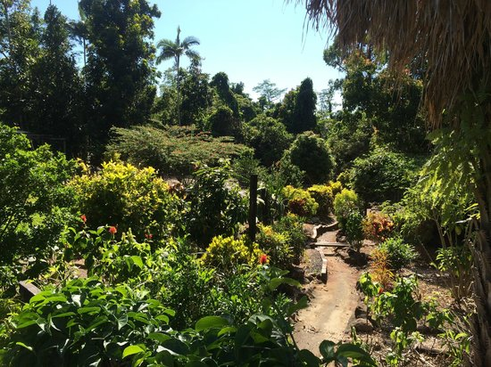 Licuala Lodge : Garden view