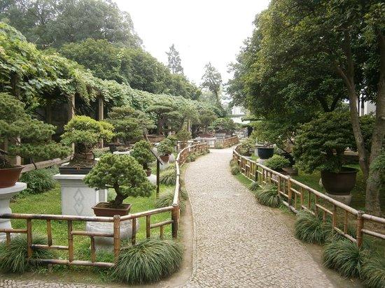 The Lingering Garden: 蘇州留園盆景