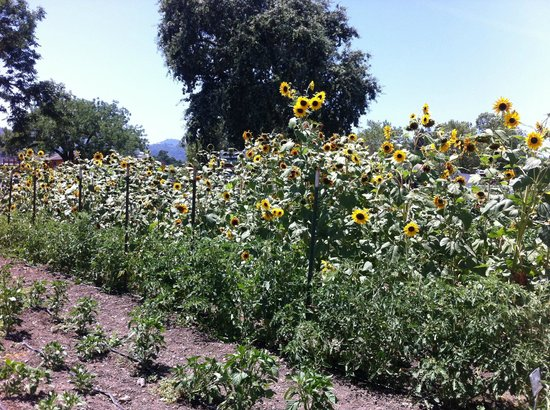 Farmstead at Long Meadow Ranch: ..