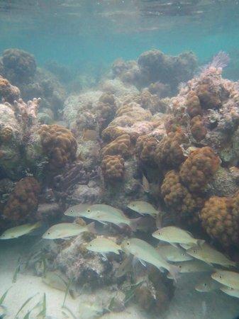 Sin Duda Villas: reef infront of hotel