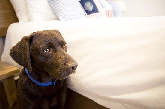 The Swan Hotel: Dog Friendly Garden Rooms