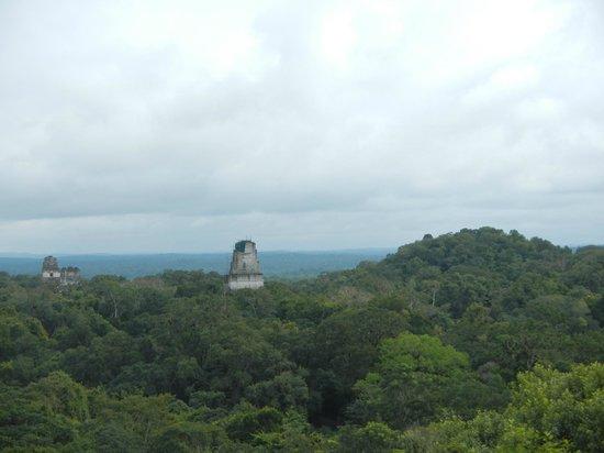 Belize Jungle Dome: Tikal