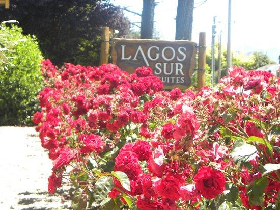 Lagos del Sur Apart & Suites: Rosas en el deck que da al lago