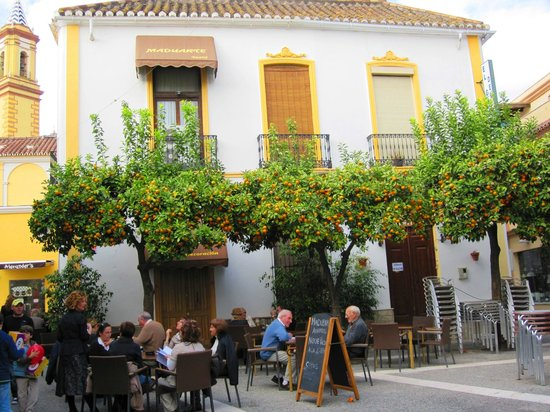 Plaza Doctor Arce - the orange trees