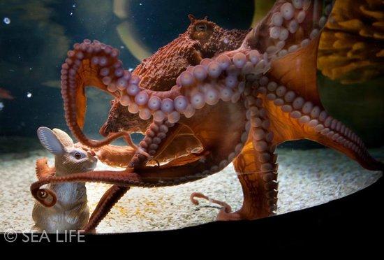 SEA LIFE Timmendorfer Strand: Oktopus