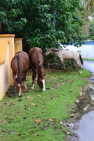 At the Waves : Horses Outside Our Gate