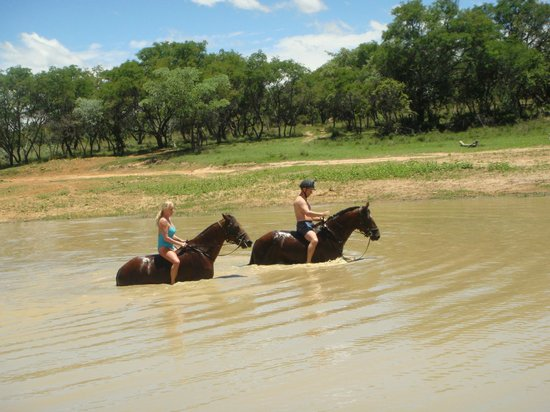 Ant's Hill & Ant's Nest : swimming with the horses