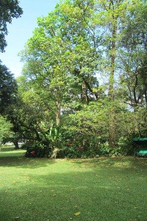 Park Eden Bed & Beakfast: Trees at B&B