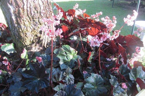 Park Eden Bed & Beakfast : Garden at B&B
