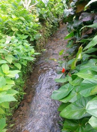 Park Eden Bed & Beakfast: Quebrada en el mismo hotel