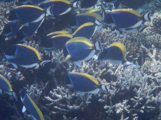 Vakarufalhi Island Resort : Reef