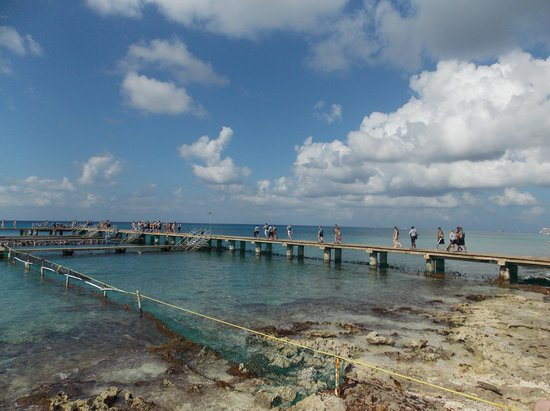 Chankanaab Reef: Walking out to where the dolphins are :)