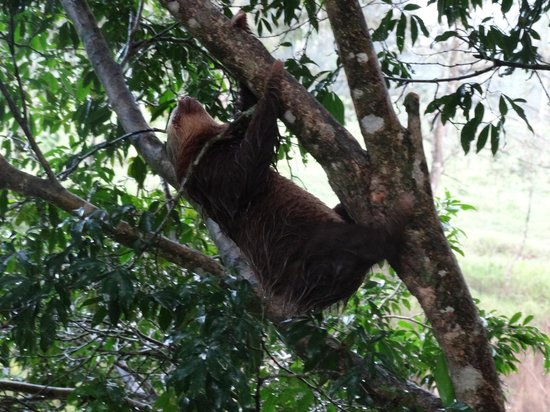 Tilajari Hotel Resort : sloth on a tree next to the jacuzzi