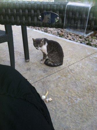 Sandos San Blas Nature Resort & Golf: Resident cat