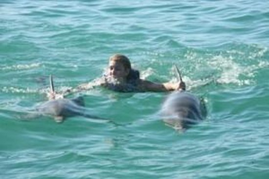 Dolphin Explorer: nager avec 2 dauphins !!! ouf !!!