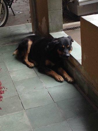 Casa Dona Elena B & B: lucky le chien de la famille (tres gentil et docile)