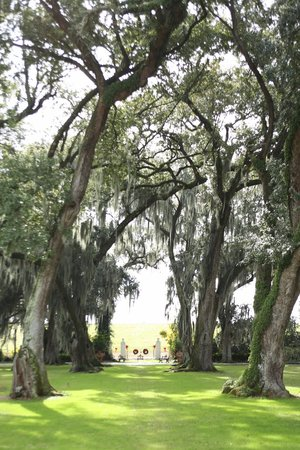 Houmas House Plantation and Gardens: Amazing live oaks.
