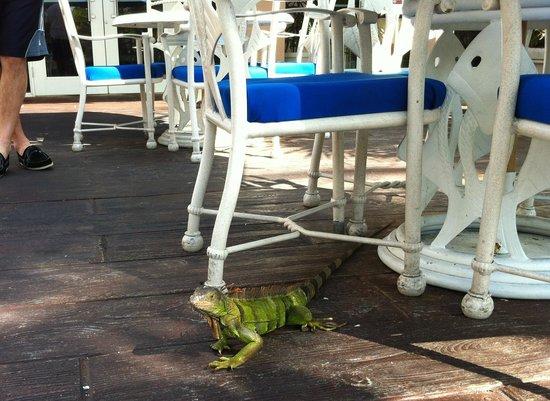DoubleTree by Hilton Hotel Grand Key Resort - Key West: Our friendly breakfast guest