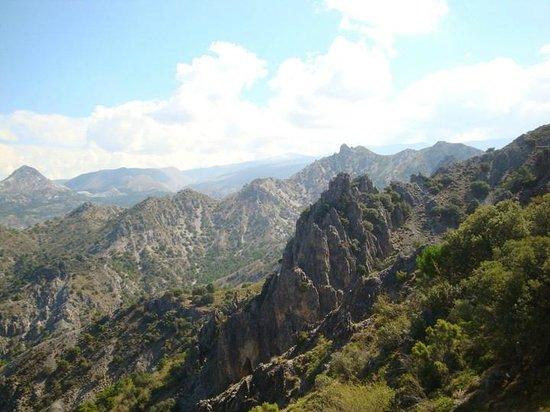 La Encina Centenaria: Parque Natural Sierra Nevada