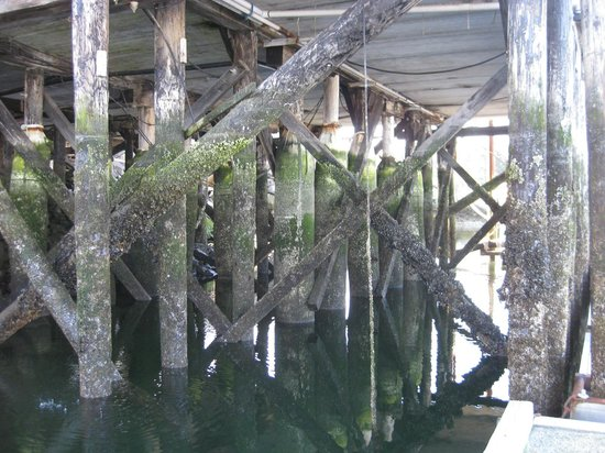 Parksville, Canada: Barnacles at French Creek Habour