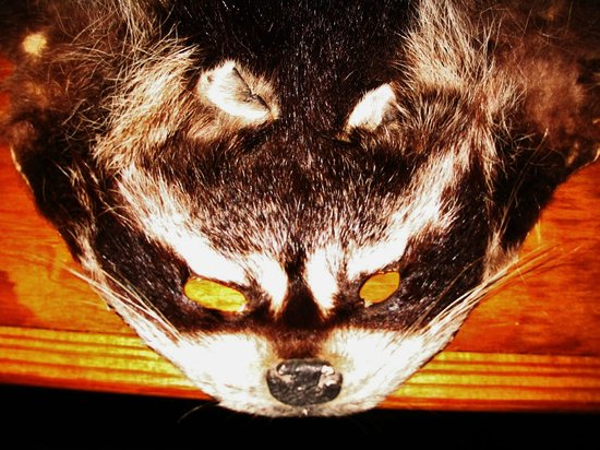 Florida Agricultural Museum : Skinned Racoon in Old Store