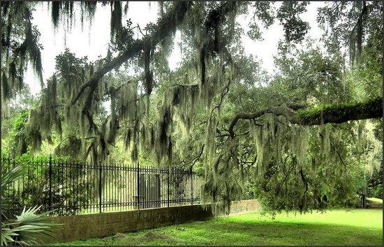 Brookgreen Gardens : Live Oaks in the Gardens