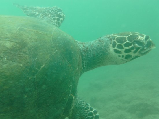 Curu National Wildlife Refuge: Sea Turtle