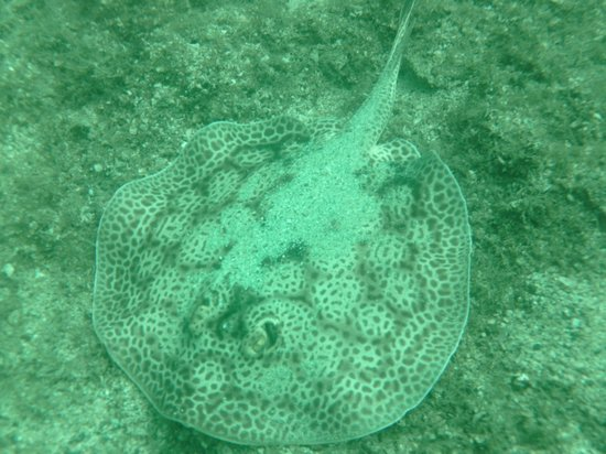 Curu National Wildlife Refuge: Sting Ray