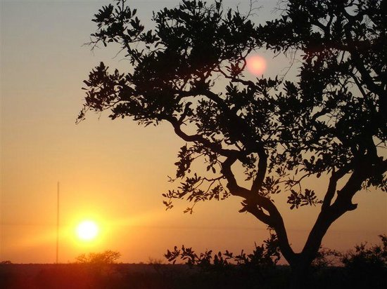 Umlani Bushcamp: Sunset