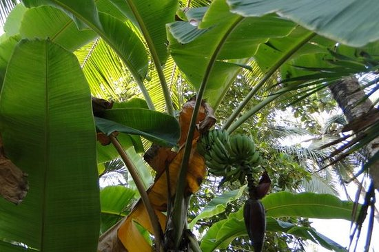 Maharaju Palace: Tropische tuin