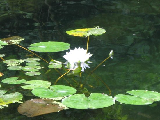 Portland Japanese Garden : Japanese Garden